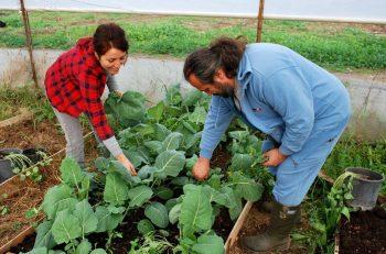 Bodrum'un organik ürünleri kapıya teslim