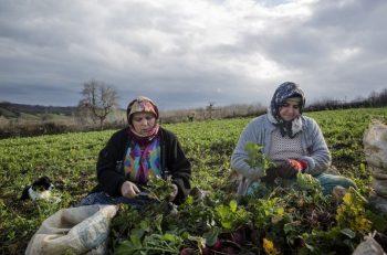 Çiftçi kadınlara toplumsal kalkınma projesi
