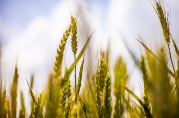 Organik tarım,  9.7 milyarlık dünyada nasıl bir rol oynayacak?