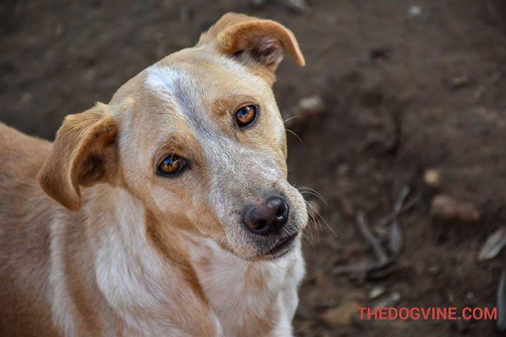 Hayvan hakları aktivistleri Yunanistan'da buluşuyor