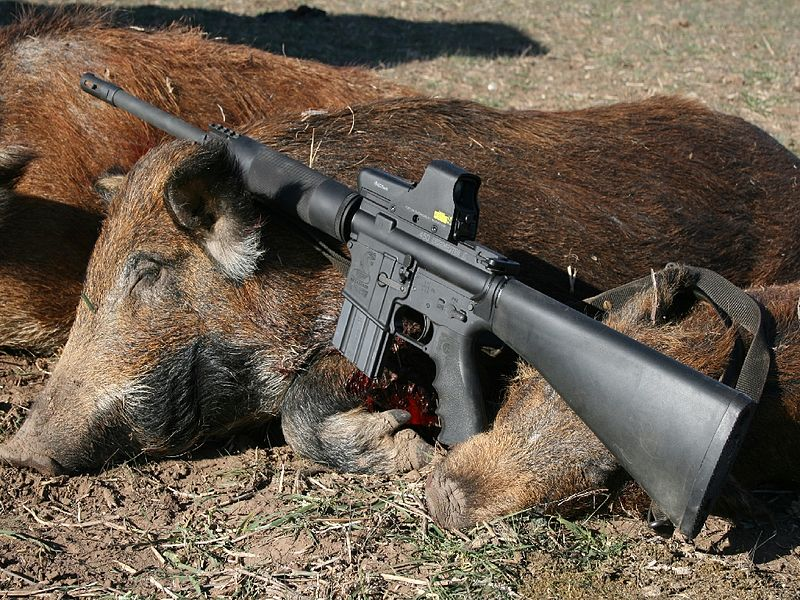 boarhunting.jpg