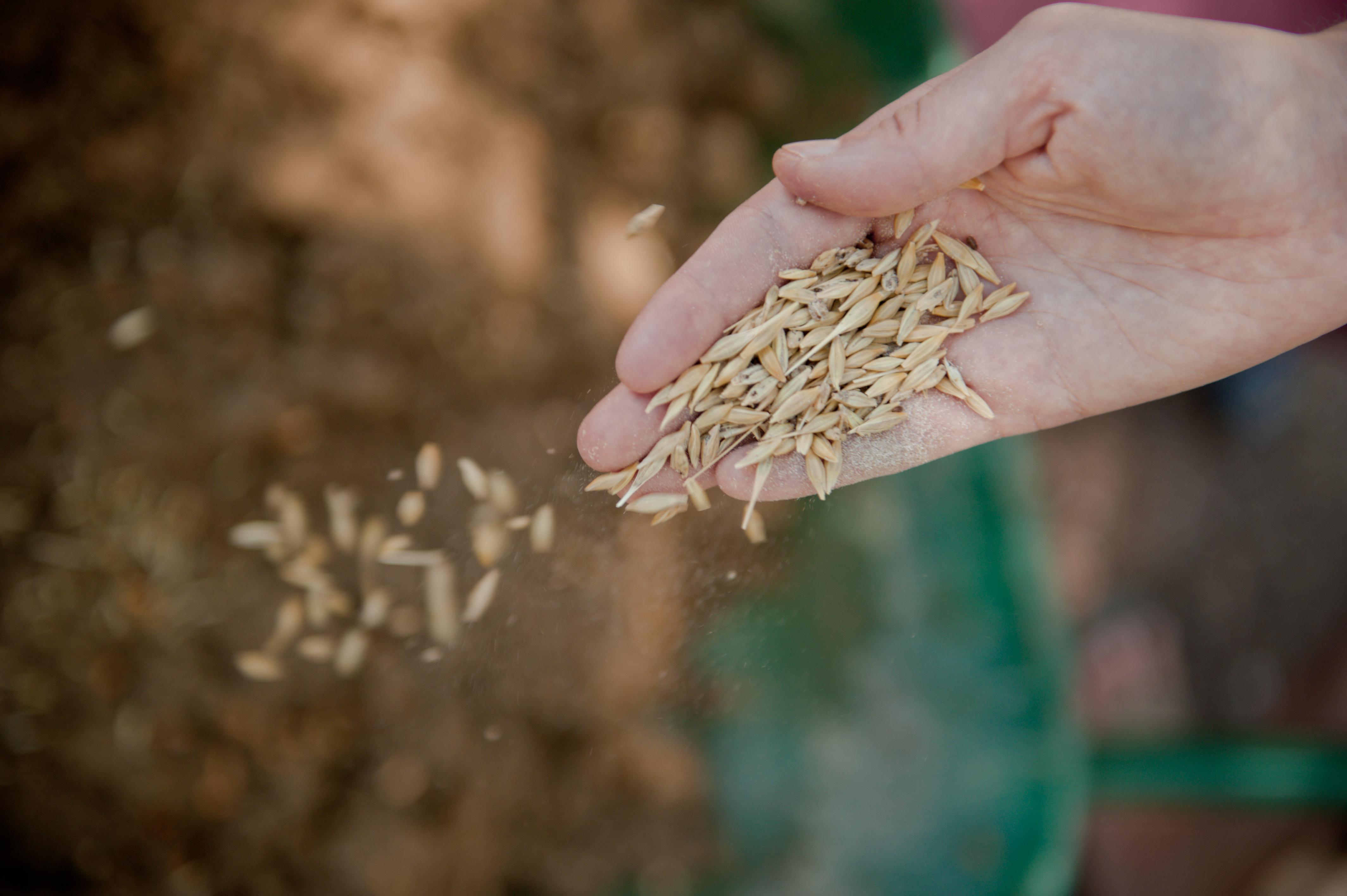 Buğday Derneği, üyelik ekibi için çalışma arkadaşları arıyor
