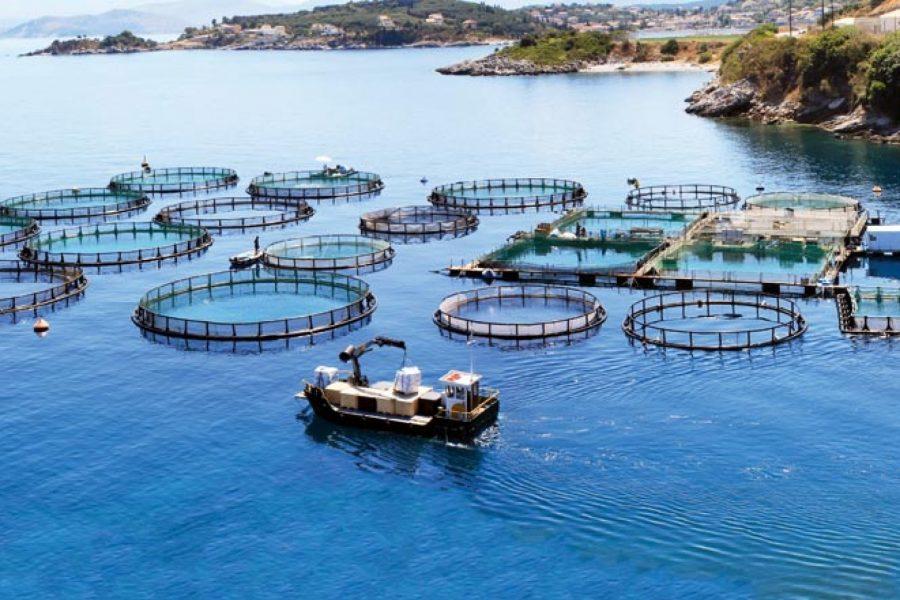 Sermayenin Denizlerdeki Yeni Durağı: Balık Çiftlikleri