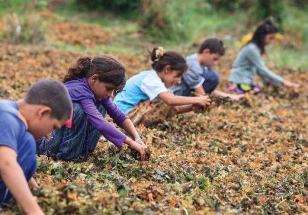 Mevsimlik işçi çocukları: Zehirli pet toplayıp satıyoruz