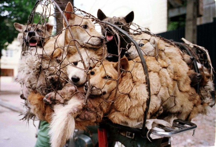 Sözde Festival: Yulin'de toplu işkence ve katliam