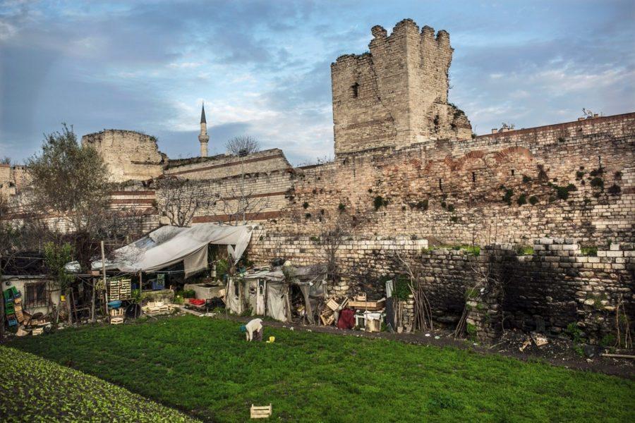 Aslıhan Demirtaş: İstanbul'un 1600 yıllık biricik kentsel tarım geleneği var-Yedikule Bostanları