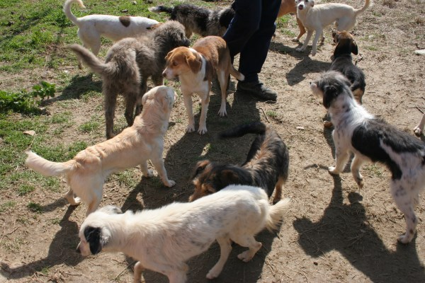 Hayvan Hakları Örgütleri Bakanlık'la görüştü: Sokak Hayvanlarına Dokunmayın!