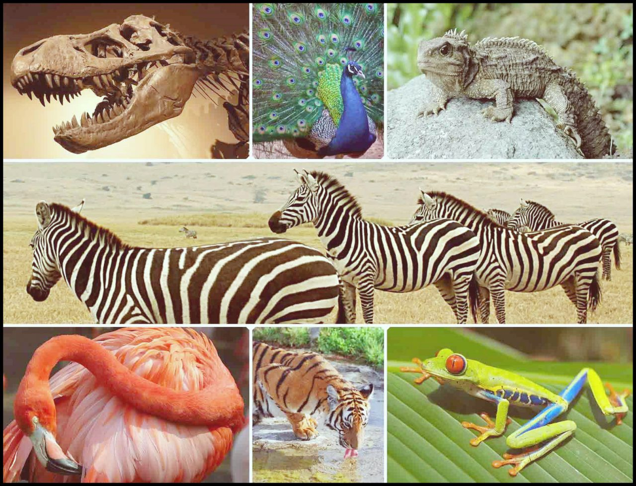 Bugün 22 Mayıs Dünya Biyolojik Çeşitlilik Günü