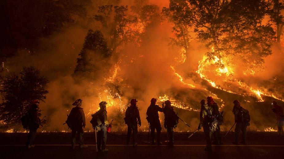 Dünyadaki Orman Yangınları Trendi ve STK'lar Bu Konuda Neler Yapıyor?