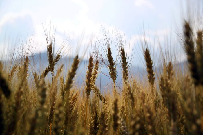 Dünya Gıda Günü'nde Geldiğimiz Nokta: Konya Büyüklüğünde Tarım Alanını 25 Yılda Kaybettik