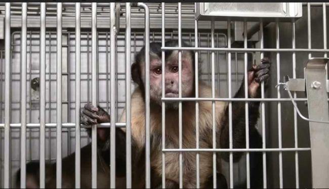 Türkiye'deki Hayvan Deneyleri Mahkemelik Oldu