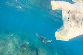 Dünyada Saniyede 160 Bin Plastik Poşet Tüketiliyor!