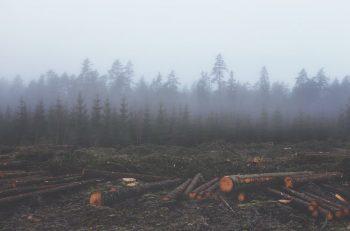 İslam Ekoteolojisi: Ekosistemi Korumak İçin Dini Bir Çağrı