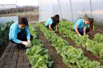 Tarım Lisesi Öğrencileri, Köylülerden Yerli Tohum Toplayıp Üretime Başladı