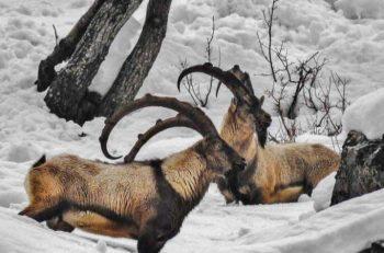 Tunceli Valiliği Dersim'de Avcılığı Yasakladı