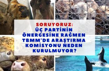 HAKİM Sordu: Hayvan Hakkı İhlâlleri Araştırma Komisyonu Neden Kurulmadı?