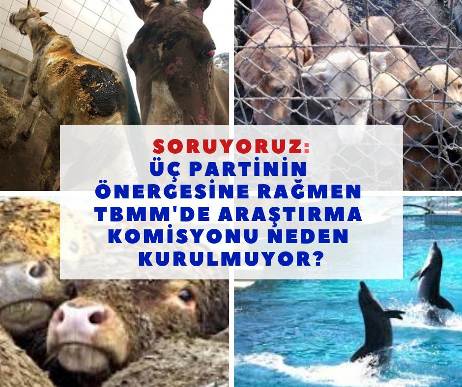 hayvan-hakları.png