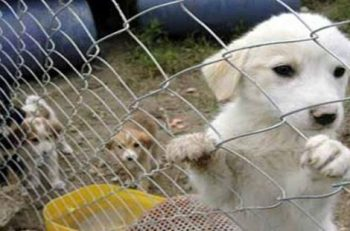 """Hayvan Barınakları: """"Bakanlığın İstenen Bilgileri Vermekten Kaçınması, Kanundan Doğan Görevlerini Yerine Getirmediğini Gösteriyor"""""""