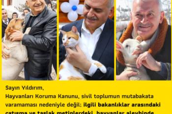 Sivil Toplum Hayvan Hakları İçin Uzlaştı; Sıra Yasada!