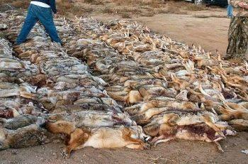 """HAKİM: """"Yüz Binlerce Hayvanı Öldüren Avcılık Da Av Turizmi De Yasaklanmalı"""""""