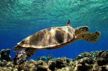 Doğal Yaşam Alanının Tahribatı Türlerin Yok Olmasını Hızlandırıyor