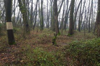 Natura'dan Farklı Bir Doğa Koruma Stratejisi: Özel Mülkiyet Oluşturma