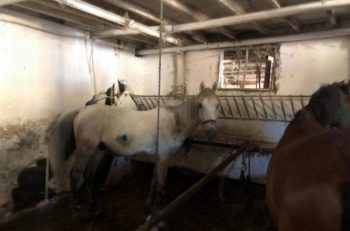 TBMM Araştırma Komisyonu, Faytonlardaki Atların Haklarını Kabul Edecek Mi?