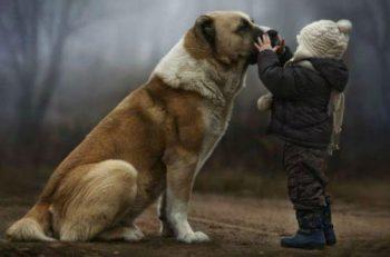 """Hayvanlara Yönelik Şiddet, Çocuklar Ve Çocuk """"Adalet"""" Sistemi…"""
