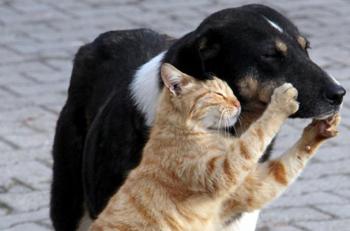 2019'un İlk Yarısında, Hayvanlara Şiddet Uygulayan Kaç Fail Tespit Edilebildi?