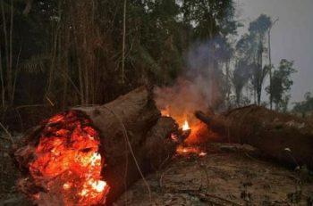 Hayvancılığın Amazon Yangınları Ve İklim Kriziyle İlişkisi