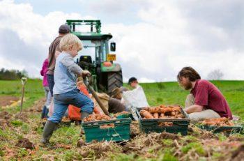 Güvenli Gıda İçin Yerel Gıda Toplulukları Desteklenmeli