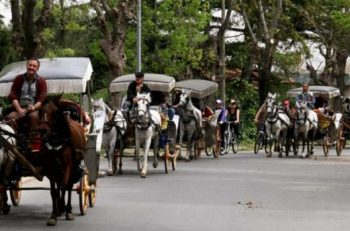 """""""Atların Öldürülme Yöntemi Kamuoyu İle Paylaşılsın, Atlı Faytonlar Yasaklansın!"""""""