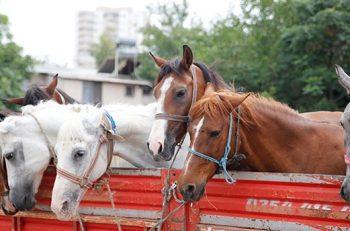 HAKİM Hayvan Hakları İhlalleri Raporunu Açıkladı