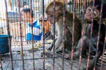 İnsanlık Serüveninde Hayvancılık Endüstrisi, Ticaret ve Salgınlar