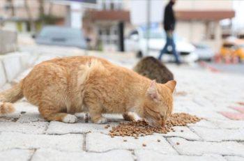 Sokak Hayvanları için Dayanışma: 45 Günde 1 Ton Mama