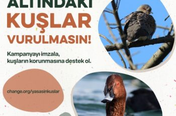 Dünya Biyolojik Çeşitlilik Günü'nde Doğa Severlerden Çağrı