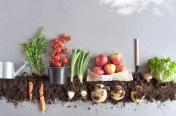 Pandemi, Tarımsal Üretimi ve Gıda Güvenliğini Nasıl Etkiliyor?(3) <br> Gıda Bankacılığı Pandemide Çözüm Modellerinden Biri Olabilir mi?