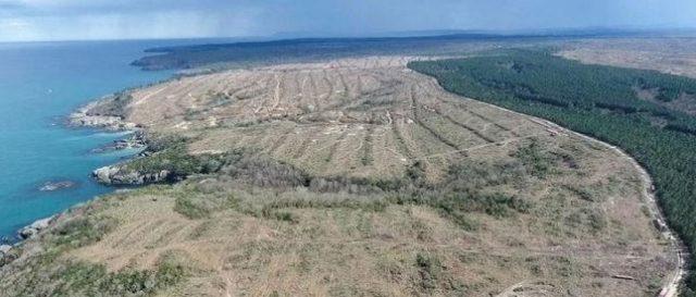 1 milyon ağacın kesildiği alan