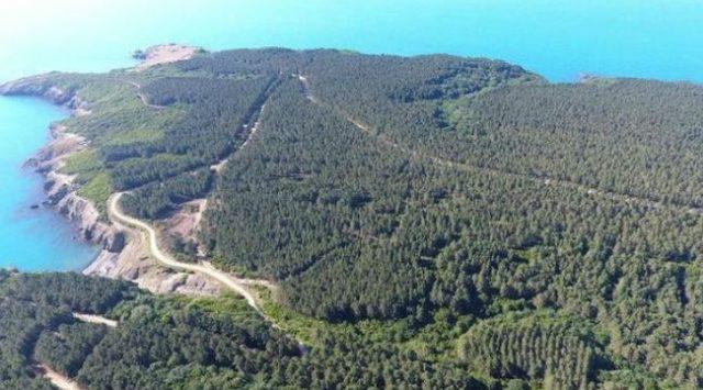 Sinop İnceburun Yarımadası'nın 7 yıl önceki halinden bir görüntü