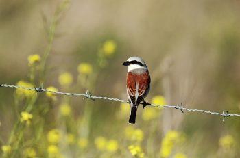 Doğa Severler Sağlıklı Bir Gezegende Yaşama Hakkı İçin Bir Arada!