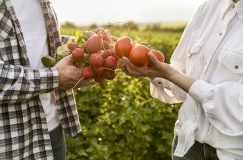Özgür ve Temiz Gıda İçin Açık Gıda Ağı