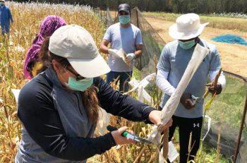 Tarım Sektörünün Pandemik Yansıması