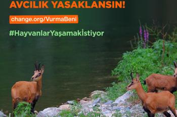 Hayvanları Koruma Günü'nde 230 STK'dan Ortak Çağrı: 'Avcılık Yasaklansın'