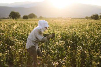 """""""Suriyeliler Üzerindeki Sömürü Politikasını Çukurova'daki Mevsimlik İşçilere Dayatıyorlar"""""""