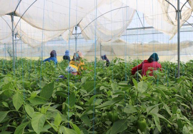 güvencesiz tarım işçileri