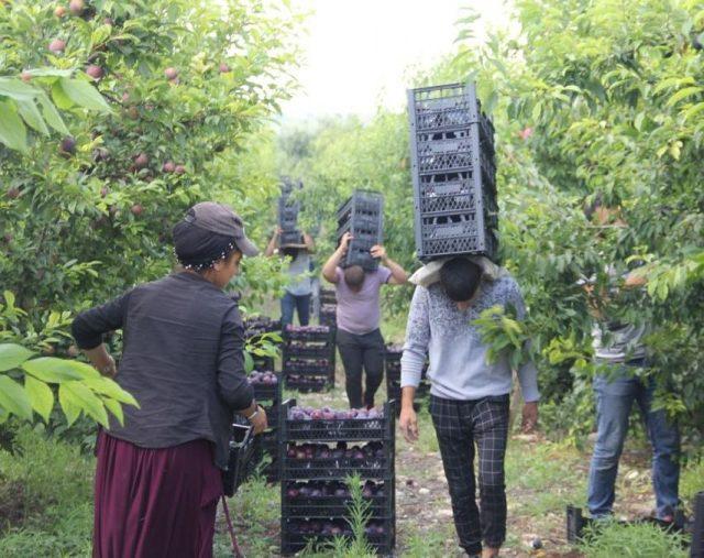 tarım işçileri