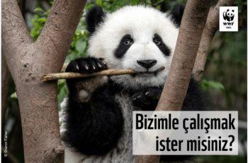WWF-Türkiye İklim ve Enerji Programı Kıdemli Uzmanı Arıyor!
