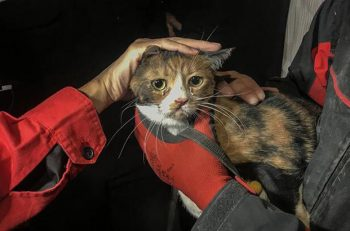 Depremden Zarar Gören Bölgelerdeki Evcil Hayvanlar için Gönüllü Çalışmalar Sürüyor!