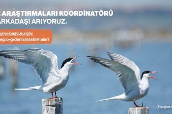 Doğa Derneği Deniz Araştırmaları Koordinatörü Arıyor