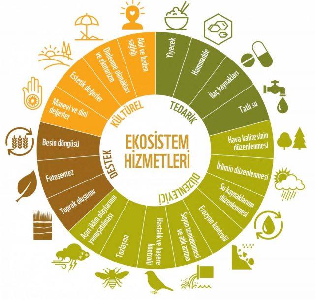 ekosistem hizmetleri